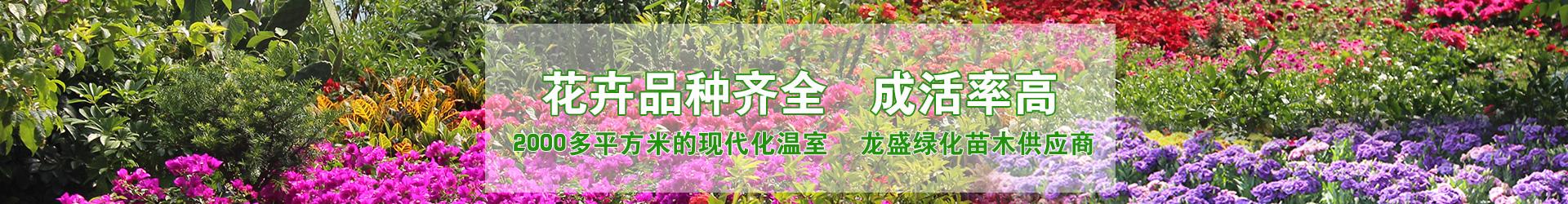 室内盆栽花卉