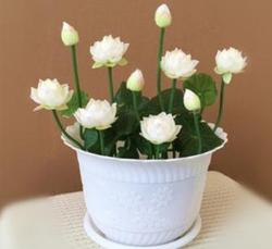室内观赏花卉