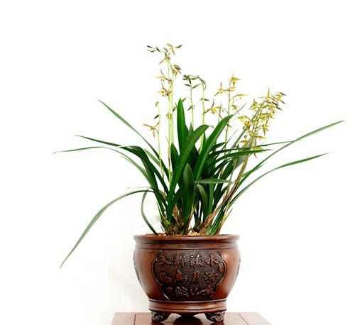 室内绿植花卉